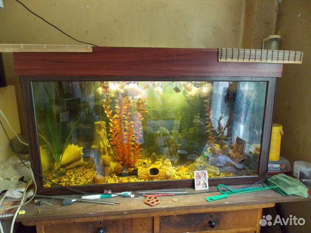 аквариумы и рыбки в спб цена которого