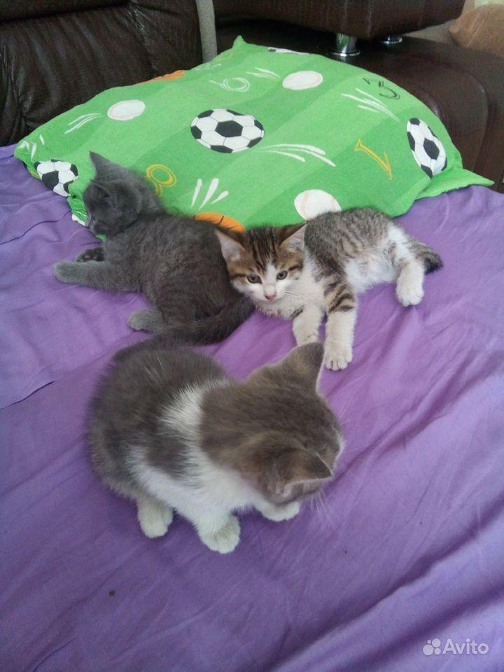 Котятки даром в Улан-Удэ - фотография № 3
