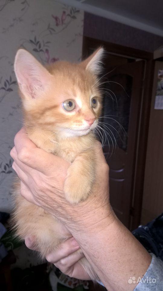 Удивительный котик в Нижнем Новгороде - фотография № 1