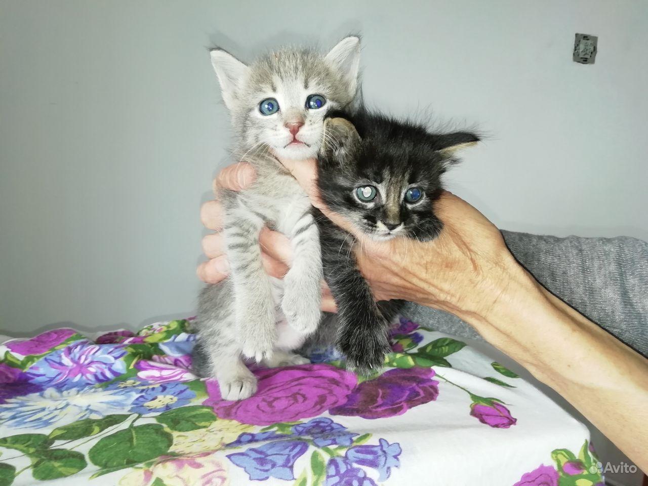 Чудесные котята в добрые руки