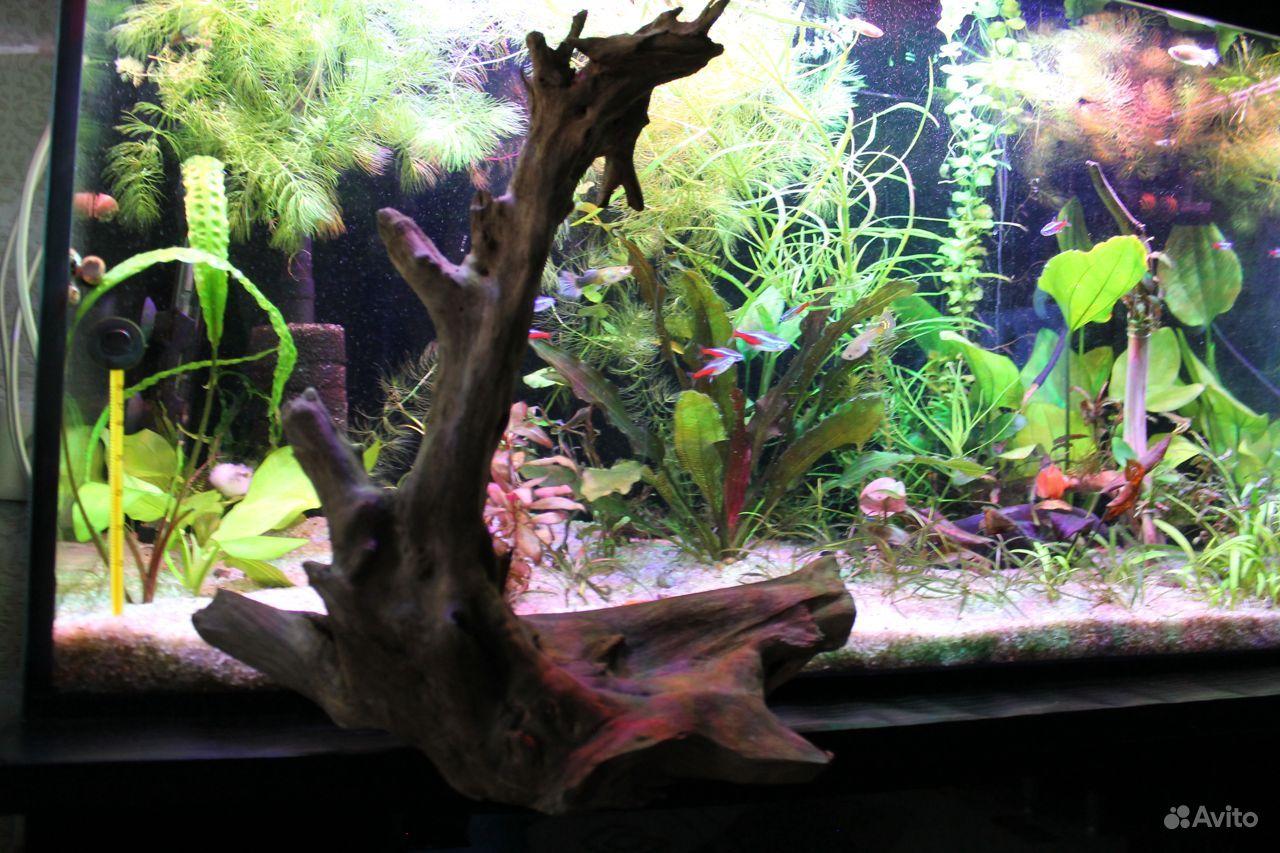 Коряга для аквариума,террариума купить на Зозу.ру - фотография № 4