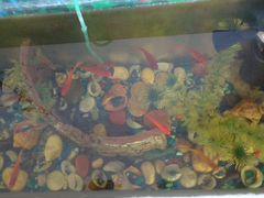 Аквариум с рыбками и всем содержимым (40 литров)