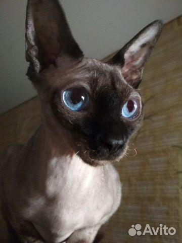 Отдам кошку в добрые руки  89785688266 купить 1