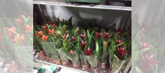 Продажа цветы срез оптом симферополь, цветы в магазине магнит косметик нижний новгород