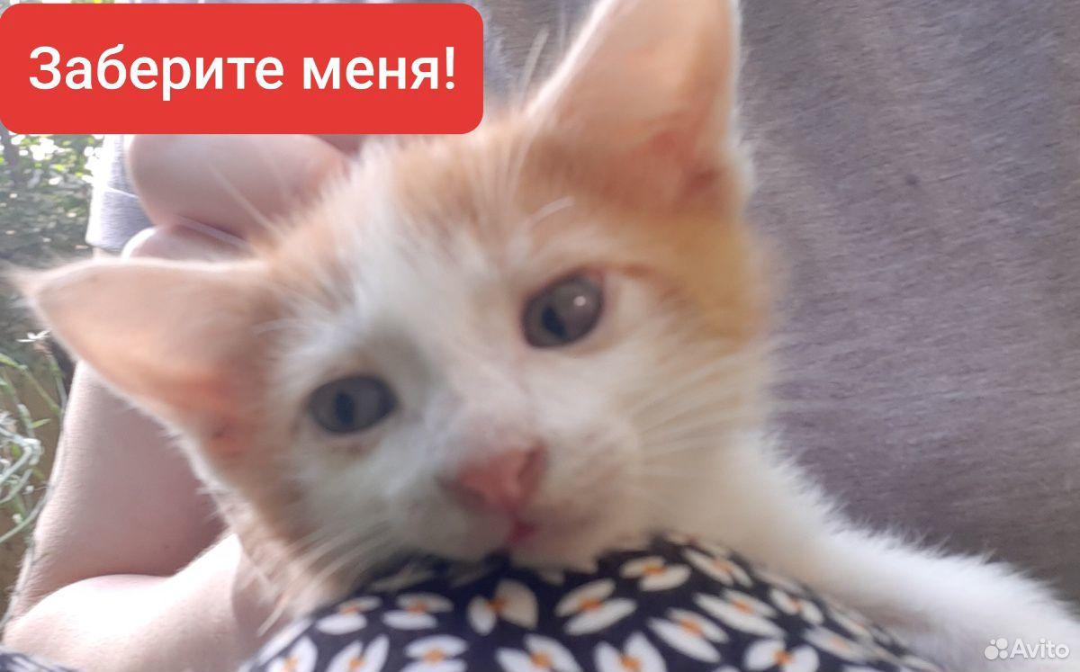 Котенку 1 месяц,мальчик,ищет дом,заботливых людей  89886380713 купить 3