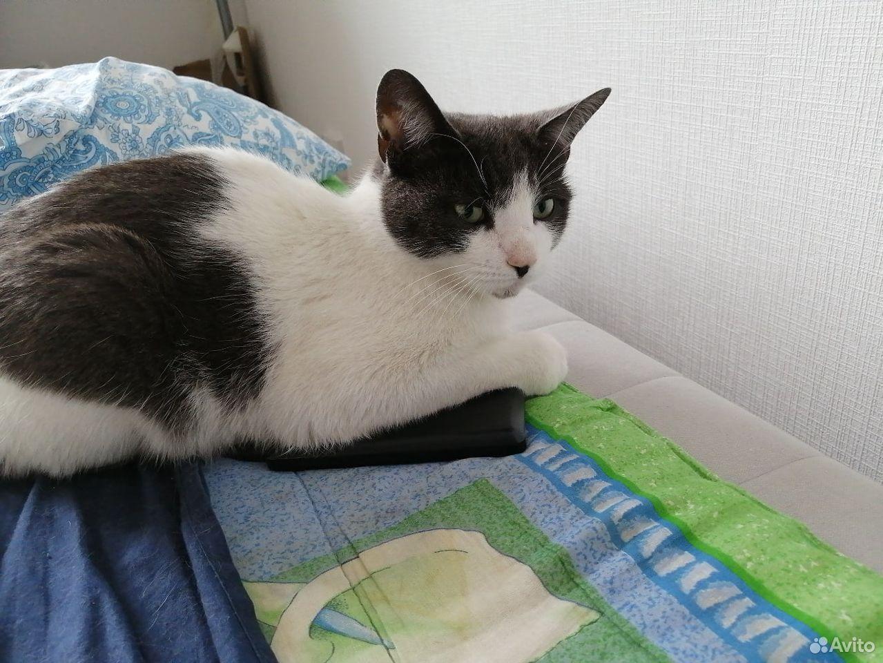 Кошка Ириска, в добрые руки  89110251756 купить 1