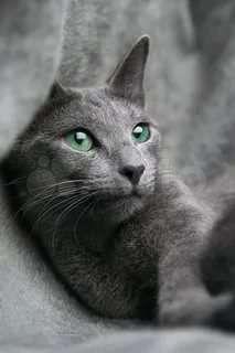 Продам кошек - Животные - Объявления в Марксе